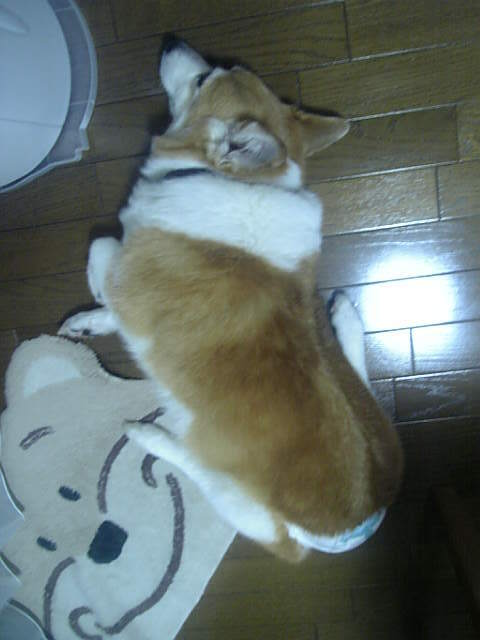 Yoko_1